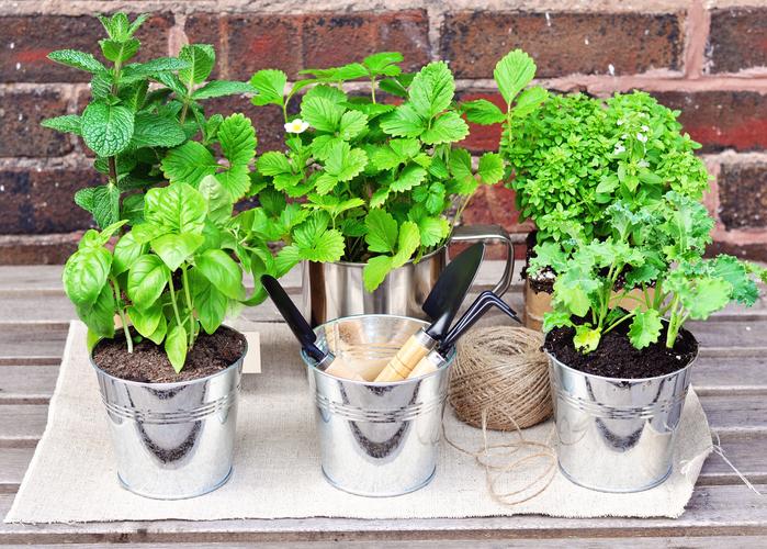 Don't Believe in Herbal Medicine?