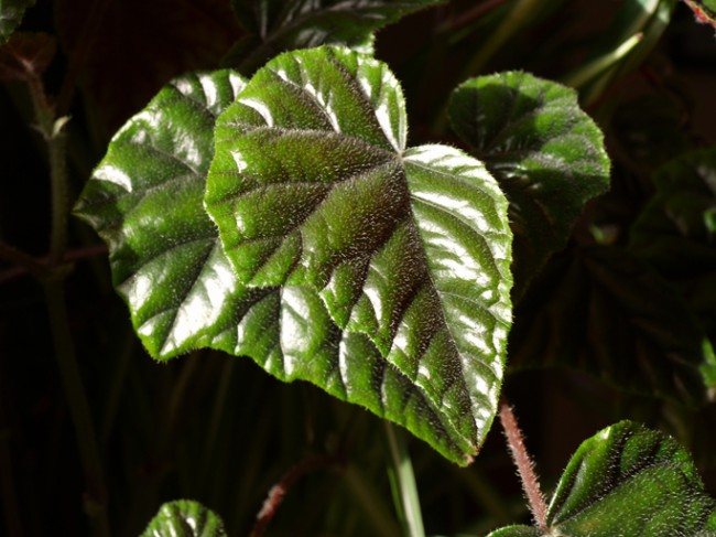 7 Indoor Plants That Will Survive In The Darkest Rooms