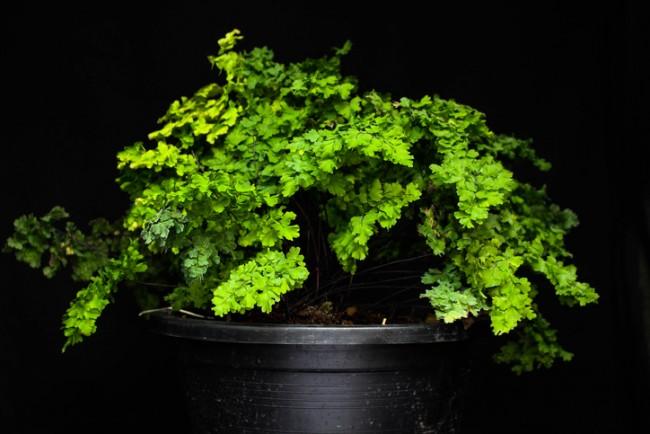 7 Indoor Plants That Will Survive In The Darkest Rooms