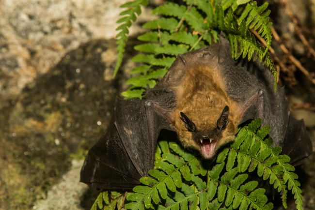 11 Surprising Animals That Hibernate