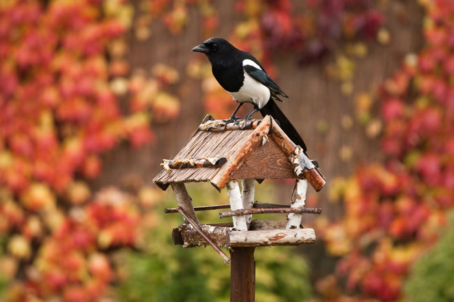 What to do in the Garden in December - Care2