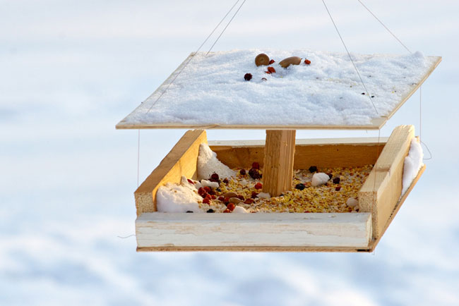 How to Clean a Winter Bird Feeder - Care2