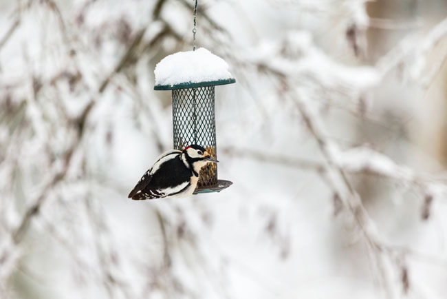 How to Clean a Bird Feeder - Care2