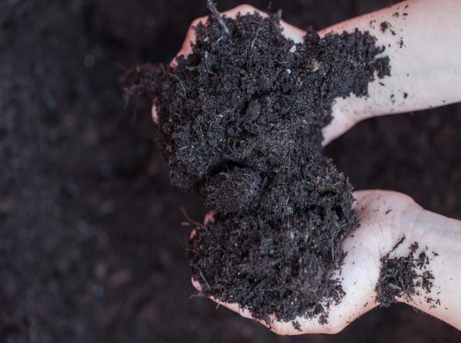 Compost in young boy hands