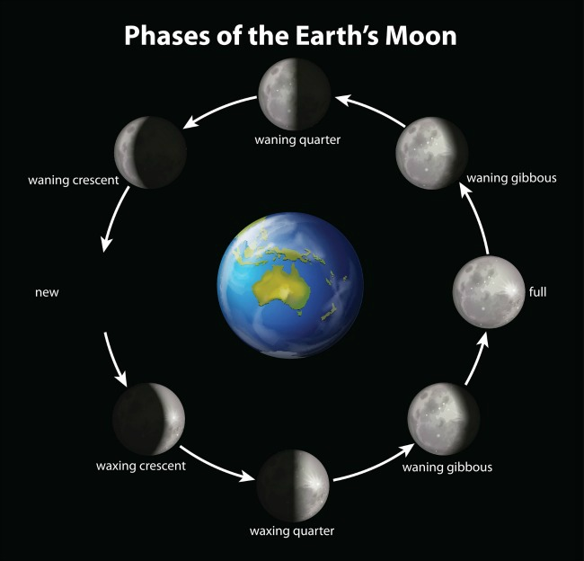 How To Use The Moons Power To Help Your Garden Care2 Healthy Living