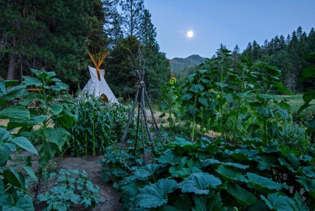 Moon over garden