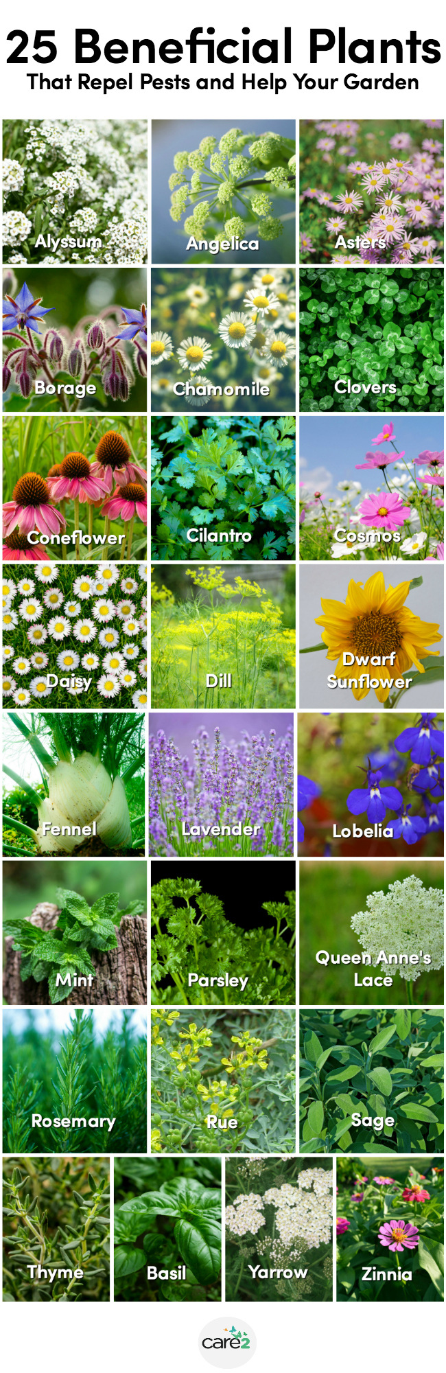 25+ Beneficial Plants for the Garden
