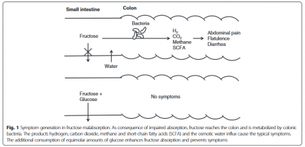 what-is-fructose-malabsorption