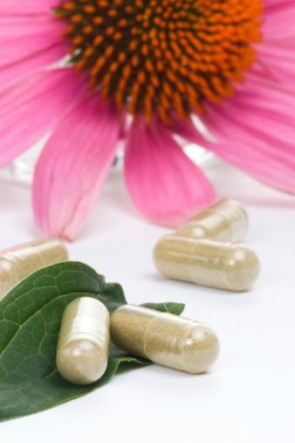 Can-Echinacea-Prevent-or-Cure-the-Common-Cold
