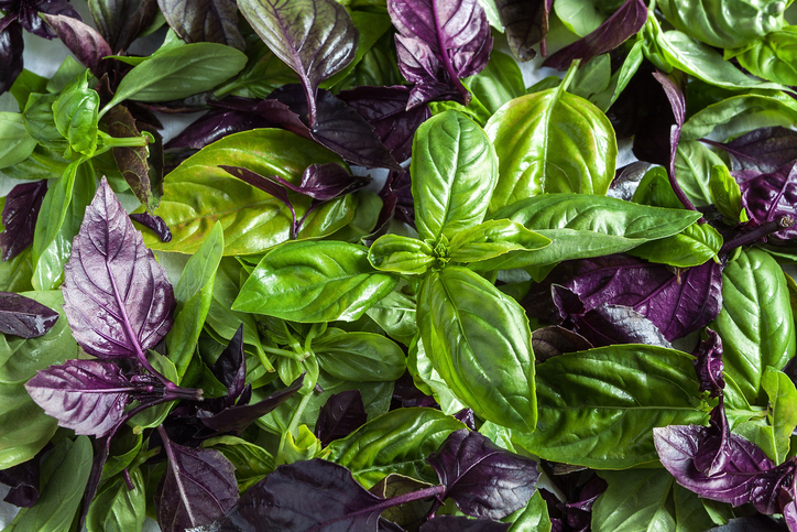 Basil is a great beginner herb to grow.