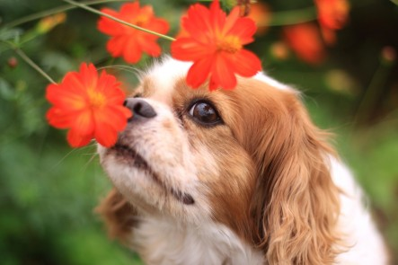 The dog of the smile and flowers