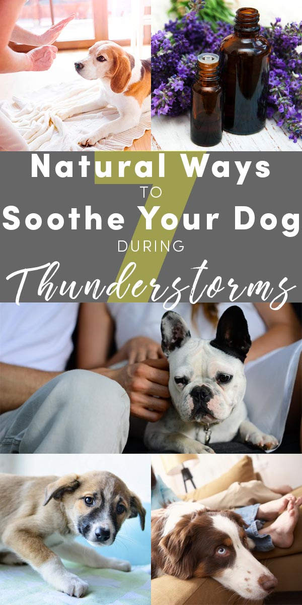My dogs are both terrified of thunderstorms. These are some ways to calm a dog during thunderstorms that vets and trainers have recommended.