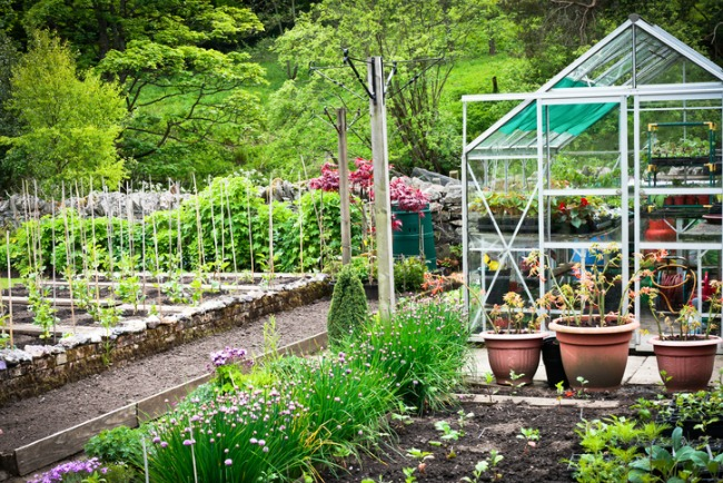 A flourishing vegetable garden and greenhouse in rural England