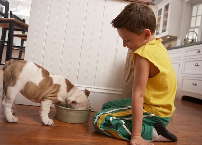 Young boy feeding puppy