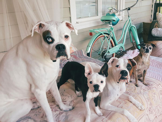 fourdeafdogs