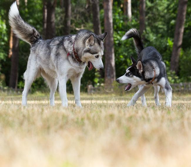 seniordogplayingwithpup