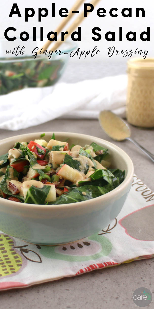Massaged kale is delicious, but you can massage other dark, leafy greens, too! Massaged collard greens are the stars of this fall salad with sliced apples, pecans, and Ginger-Apple dressing.