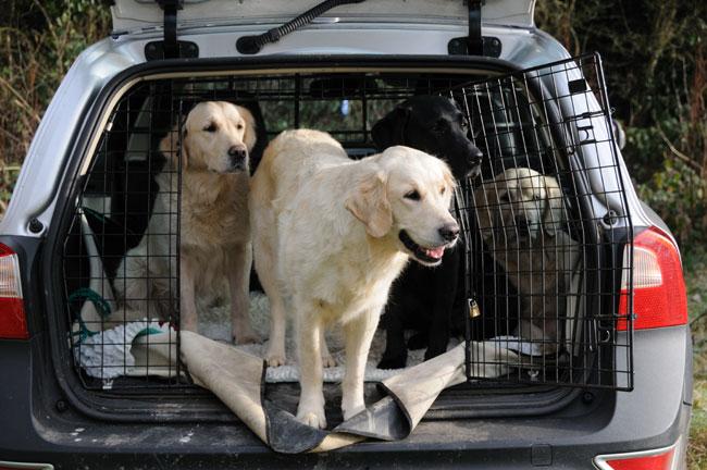 dogssecuredincrateincar