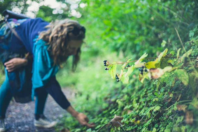 Foods to Forage in Fall - Care2