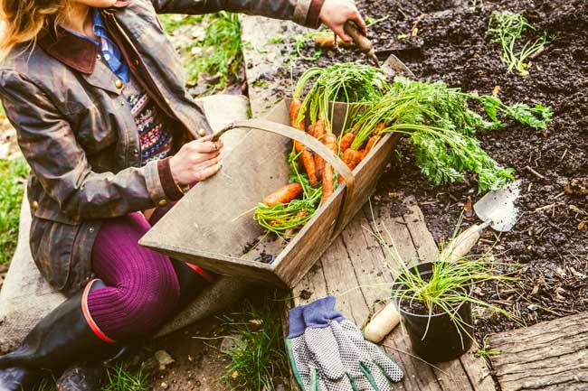 What to do in the garden in november