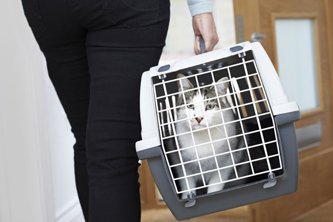 Taking a Cat to the Vet in a Carrier