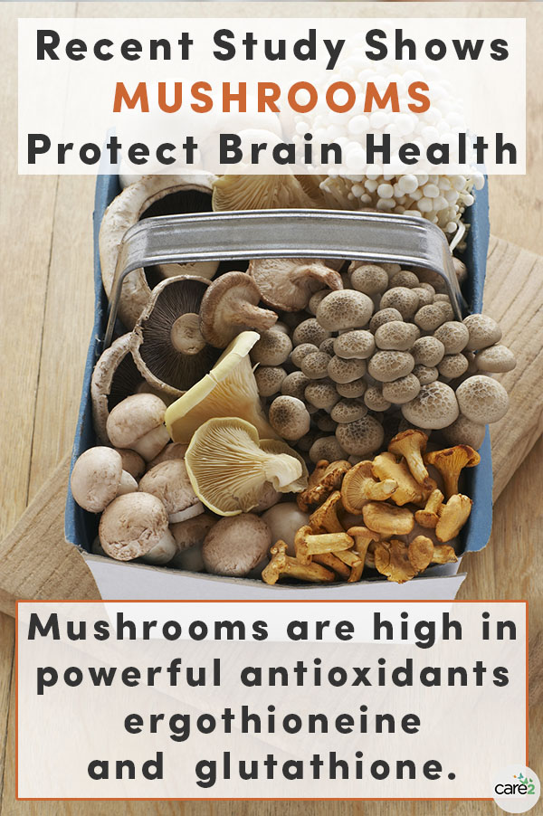New research suggests that two antioxidants found in mushrooms may help protect us from age-related health issues, like Alzheimer's.