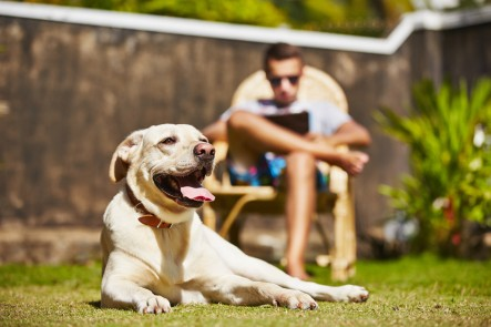 Dog laying on grass, man with laptop in background