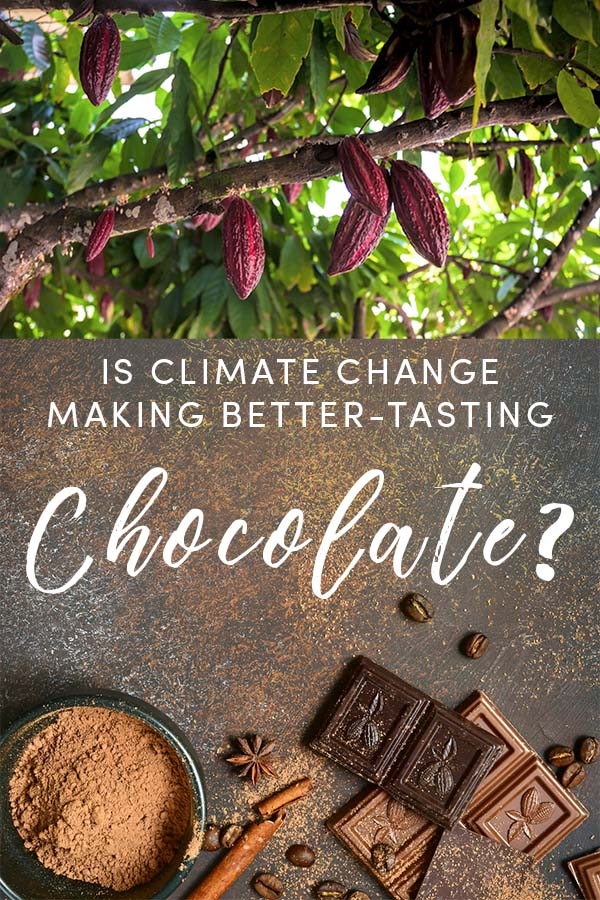It's not news that climate change is impacting chocolate production, but there are recent articles out there about a new study showing that climate change is making chocolate taste better. Is it true?