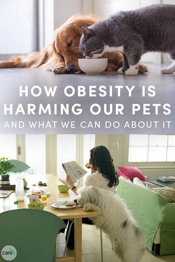 The Association for Pet Obesity Prevention estimates that more than half of dogs and cats in the U.S. are overweight or obese. While we might associate a fat cat or dog with a happy one, we actually aren't doing our pets any favors when we overfeed them.