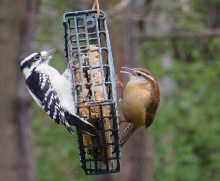 birdseatingvegansuet