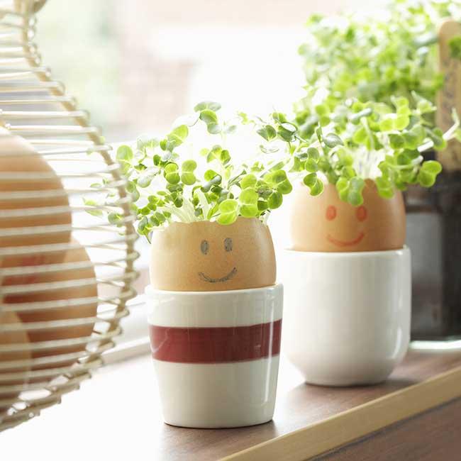 Growing herbs in eggshells.