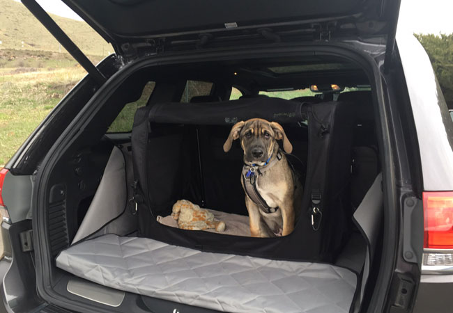 Tips for Driving Safely with Your Dog