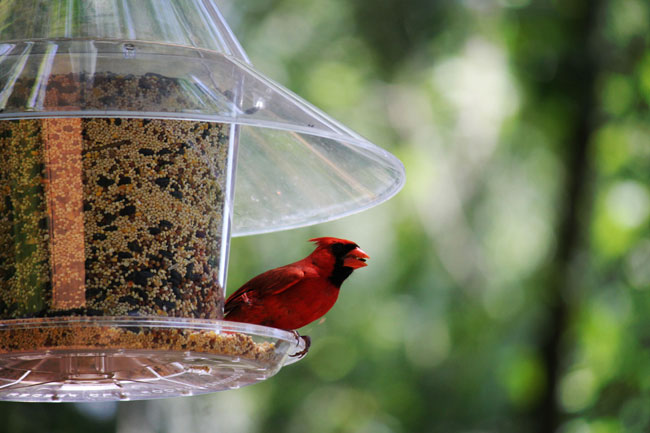 coveredbirdfeeder
