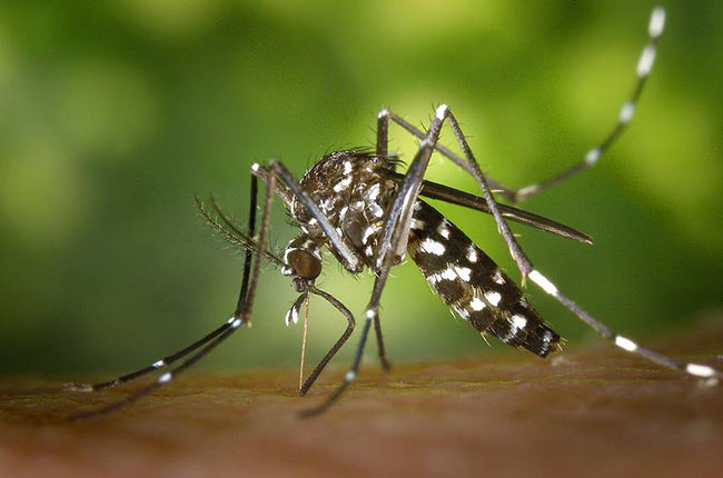 Which Virus-Bearing Mosquitoes Live Near You? Check These Maps.
