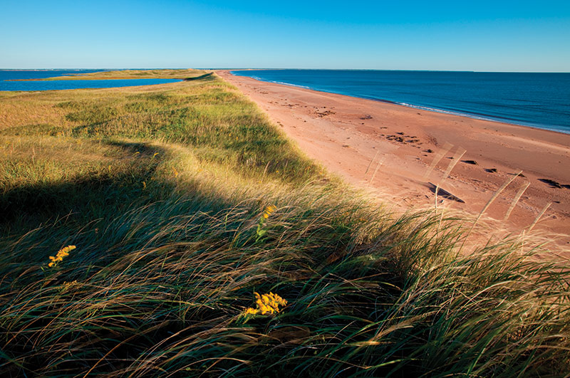 Conway Sandhills, PEI (Photo by John Sylvester)