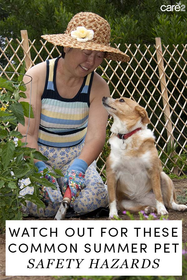 Every summer the Pet Poison Helpline is flooded with calls about pet exposure to toxic products. Take these summer pet safety precautions to keep your pet safe.