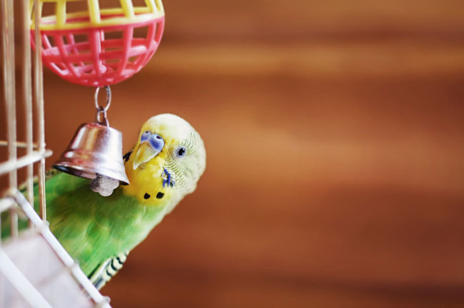 8 Tips for Keeping Your Pet Bird Happy