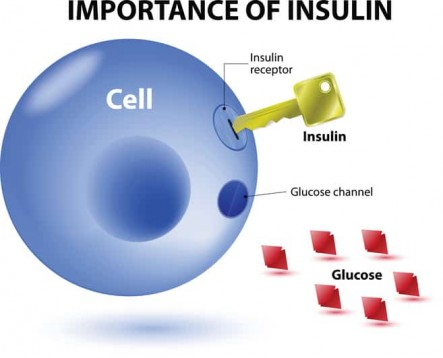 prediabetes-and-insulin