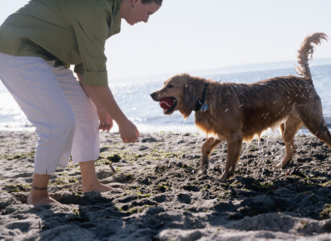Good Dog Beach Etiquette