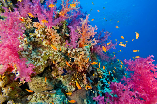 Diverse Coral Reef