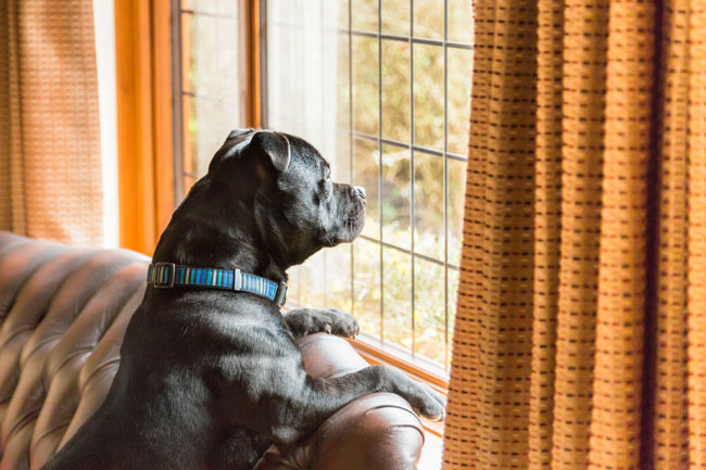 Can Dogs Tell Time (& Do They Miss You When You're Gone)?