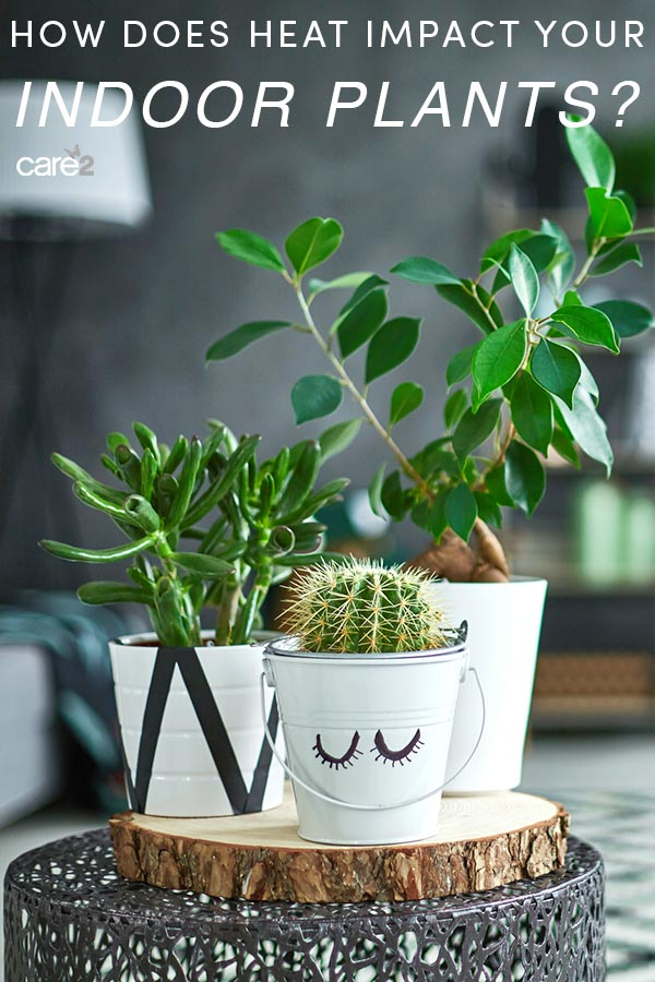 How Does Heat Affect Your Indoor Plants?