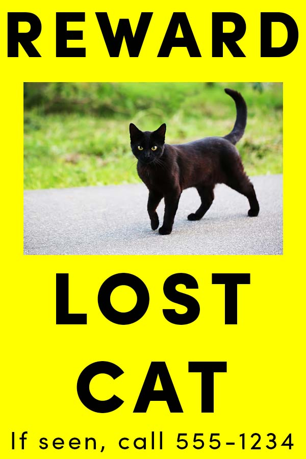 What to Do If Your Cat is Missing - A bright poster offering a reward can be a big help.