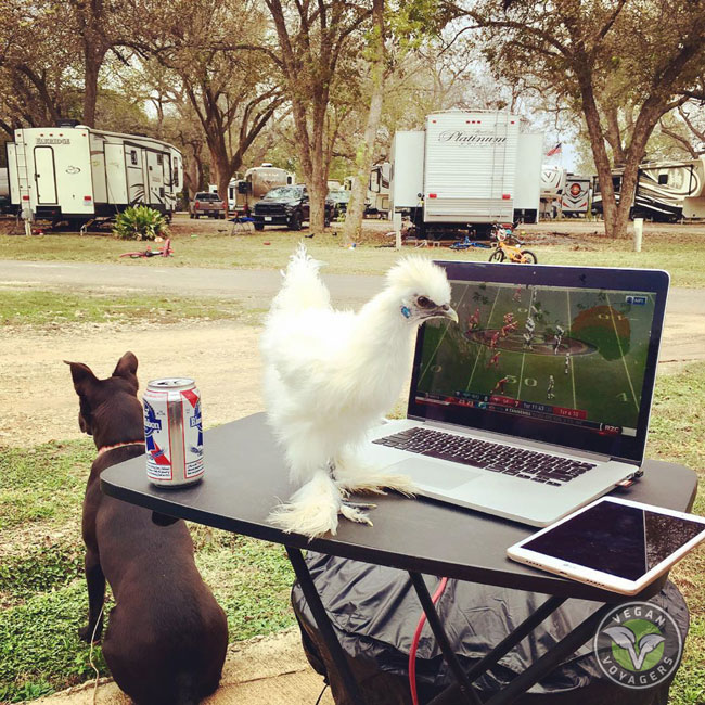 What to Consider When RVing with Your Pets