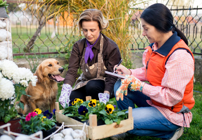 Etiquette When Taking Your Dog to the Farmers' Market