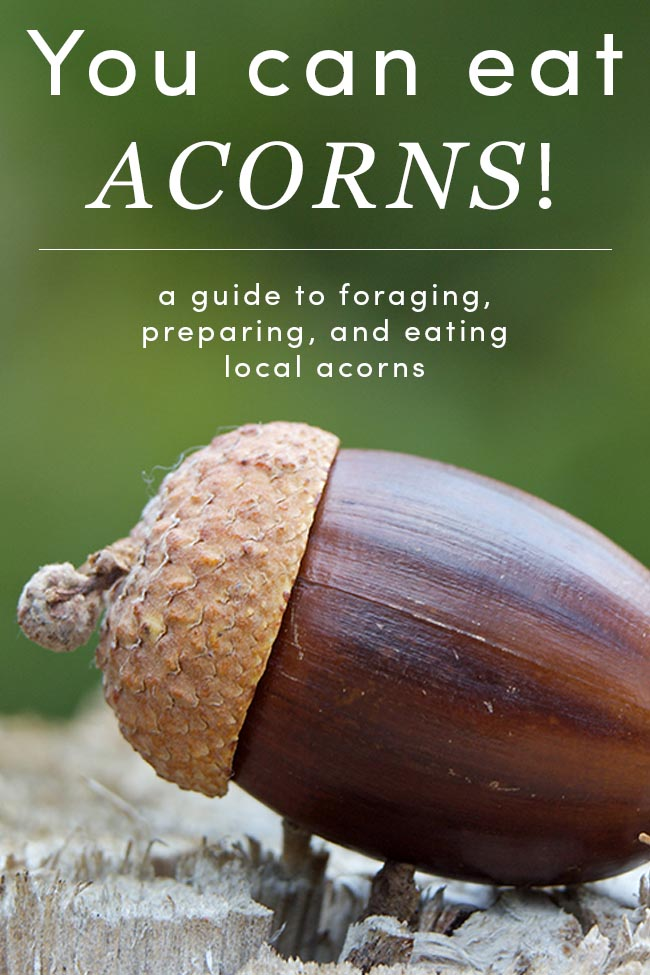 Are Acorns Edible? 8 Acorn Recipes to Try