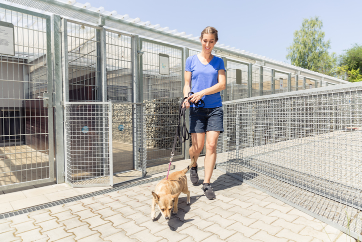 Woman walking a shelter dog