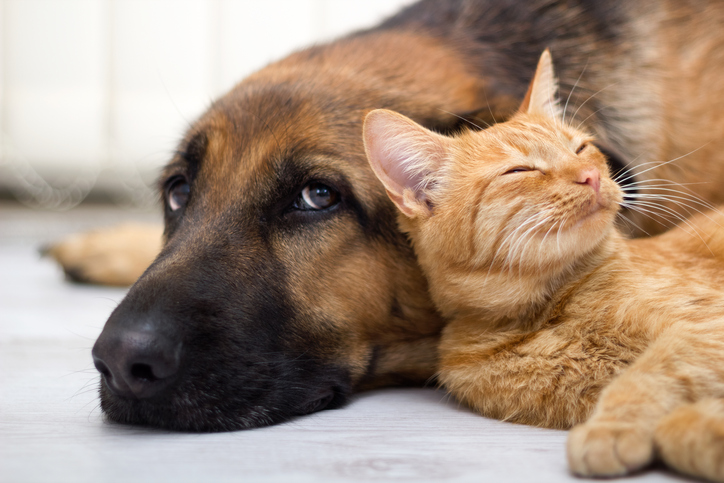 dog and cat lying on the floor together