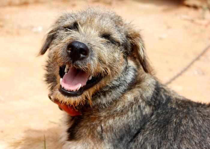 mutt smiling
