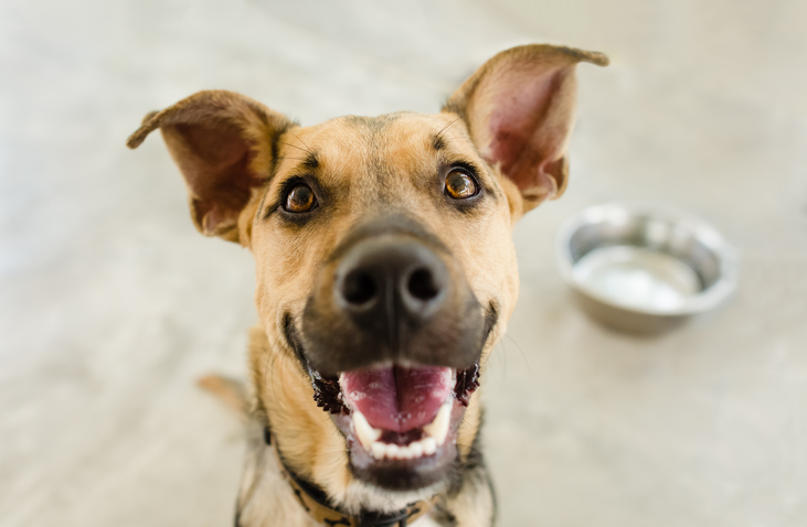 animal shelter dog smiling next to a food bowl
